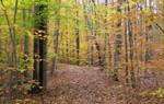 Autumn Hiking