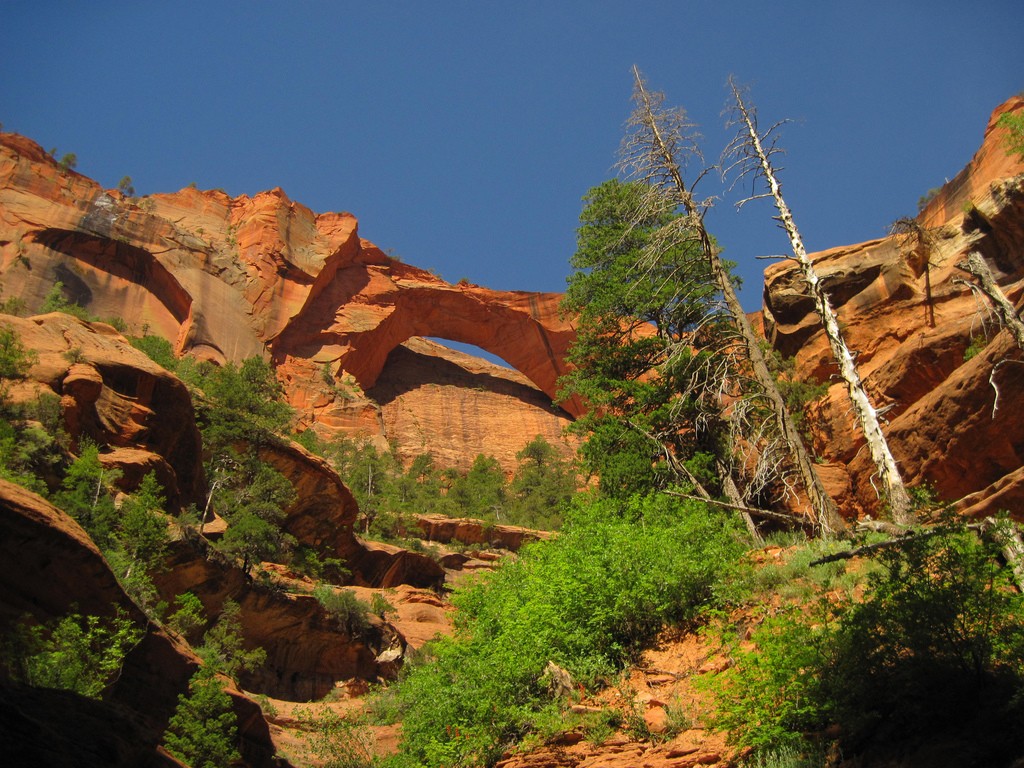 7 Things To Do In Zion National Park