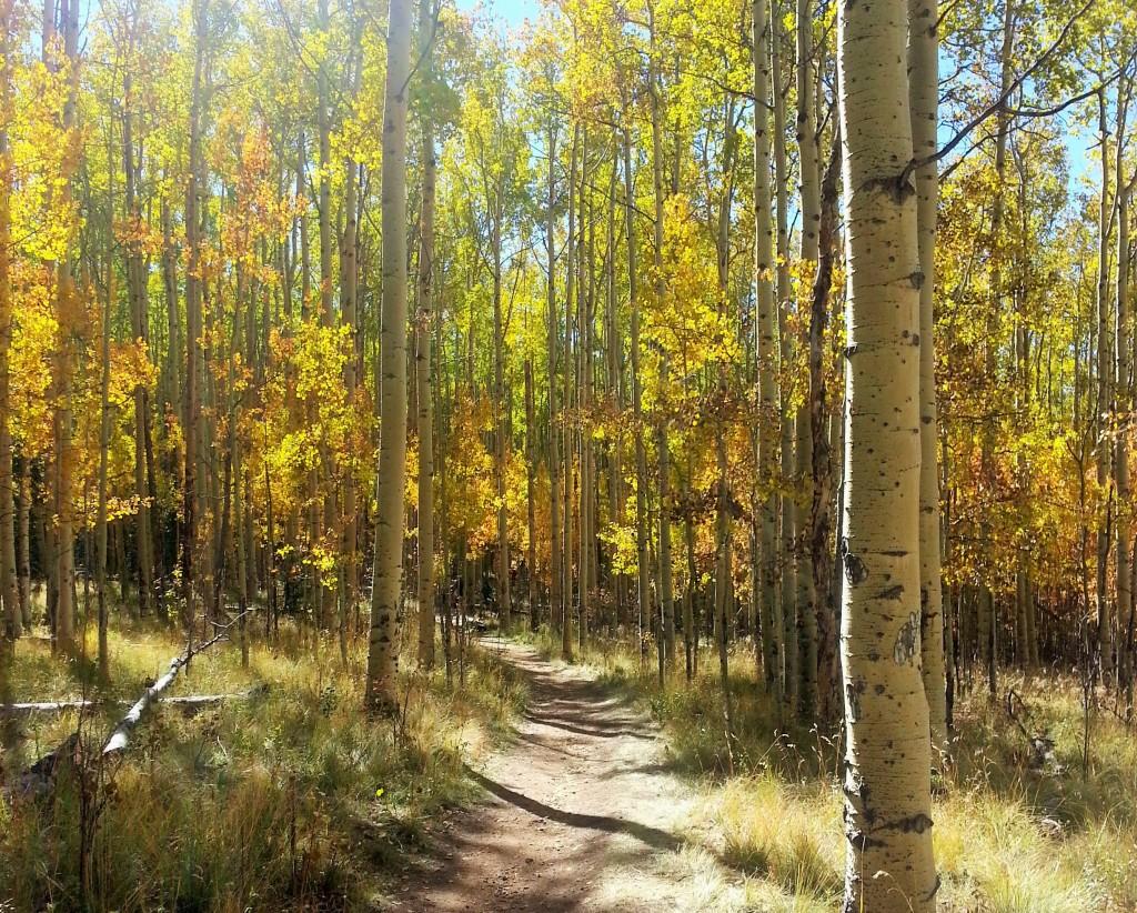 Kenosha Pass Colorado
