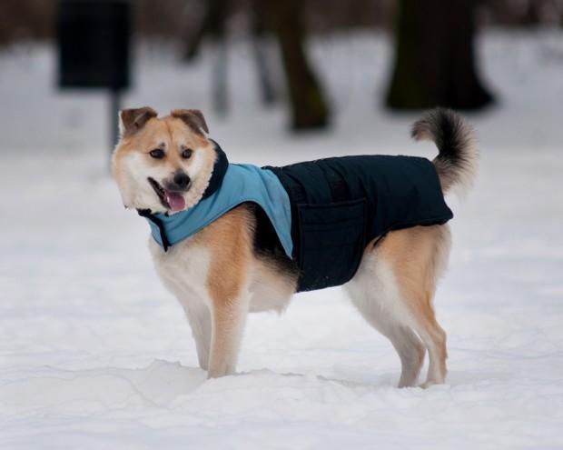 Dog Jacket Sierra Trading Post