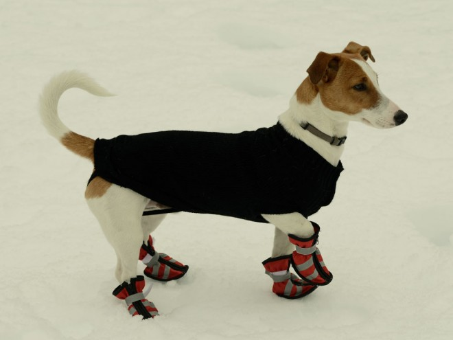 How to get dog boots to stay on