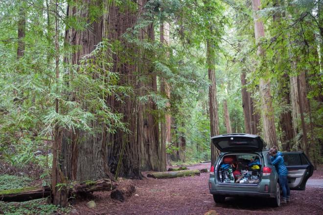 Jedidiah Smith Wilderness, near Redwood National Park. Photo by Will Rochfort.
