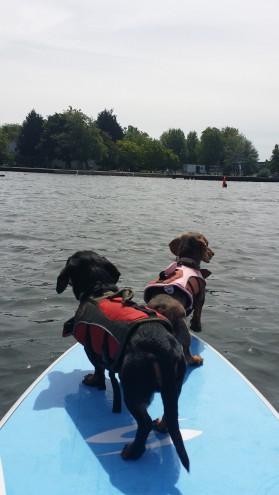 How to SUP with Dog