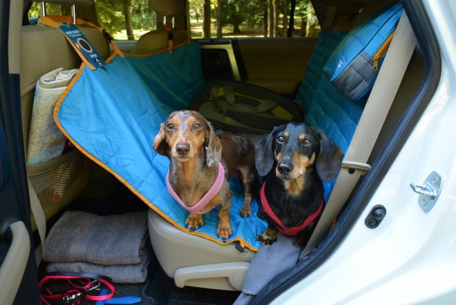 Dog Travel Road Trip