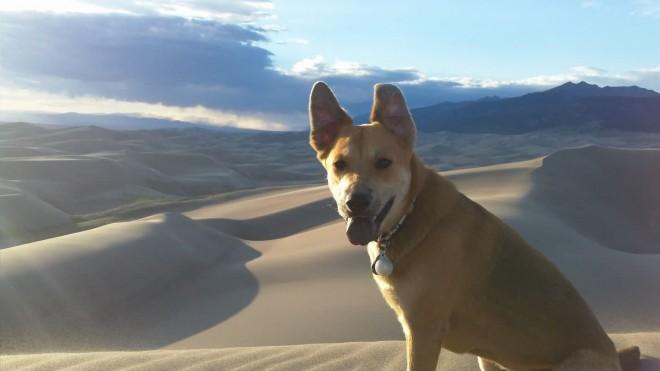 Dog-friendly hikes Colorado