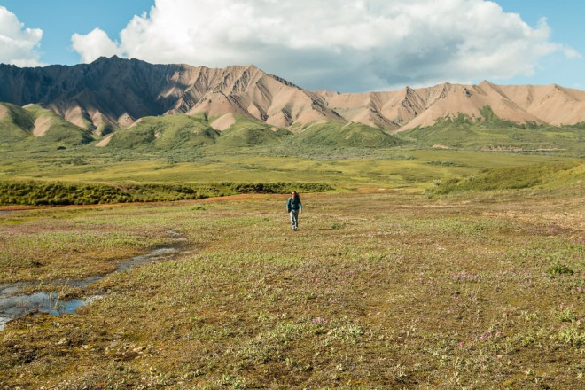 Denali National Park hiking