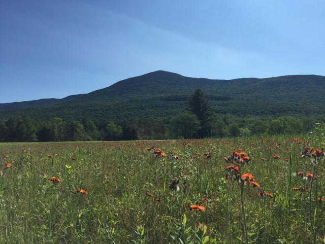 Vermont's highest mountains mt. abraham