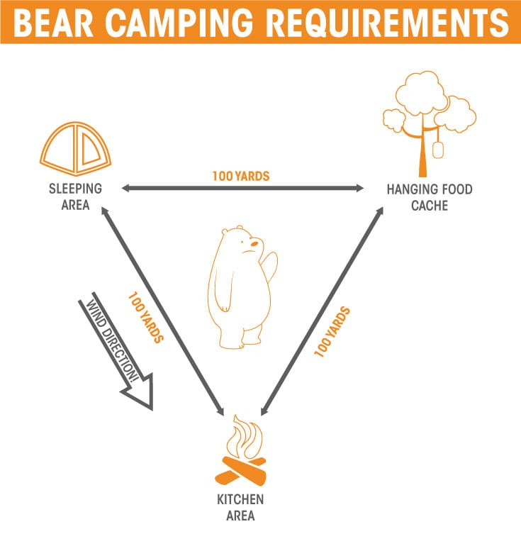 bear safety requirements