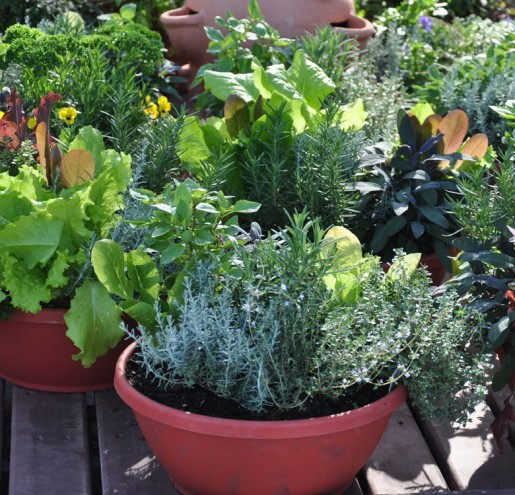 blog-1024x768-containerGardening-052217-2