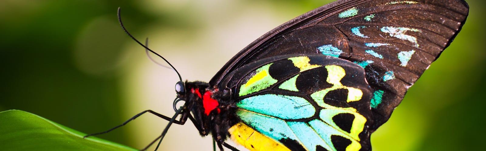 Macro Lens Butterfly