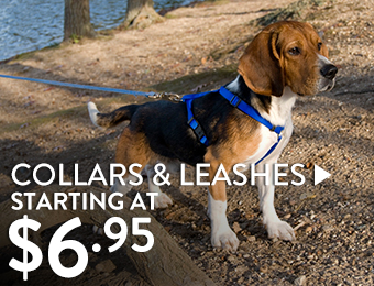 Collars & Leashes – Starting at $6.95