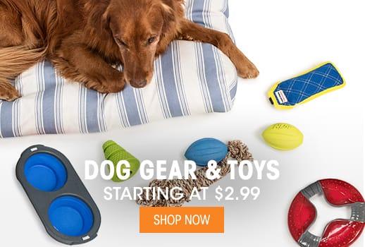 Dog Gear & Toys - Starting @ $2.99